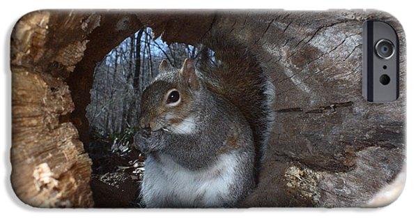 Sciurus Carolinensis iPhone Cases - Gray Squirrel iPhone Case by Ted Kinsman