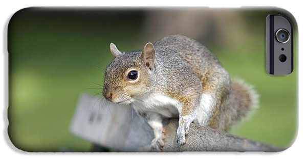 Bushy Tail iPhone Cases - Grey Squirrel iPhone Case by Georgette Douwma