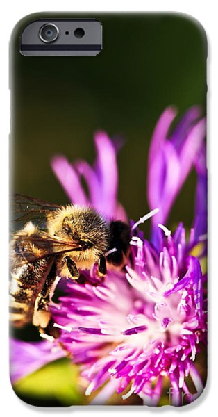 Feeding iPhone Cases - Honey bee iPhone Case by Elena Elisseeva