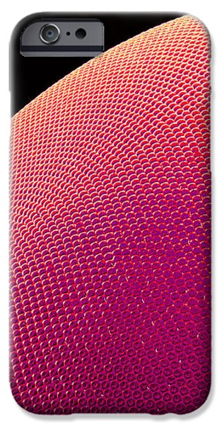 Hover Fly Eye, Sem iPhone Case by Susumu Nishinaga