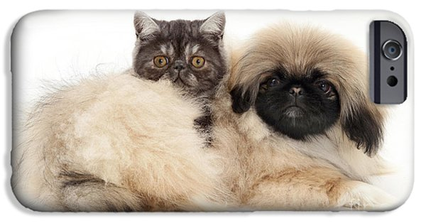 Pekingese iPhone Cases - Kitten And Puppy iPhone Case by Jane Burton
