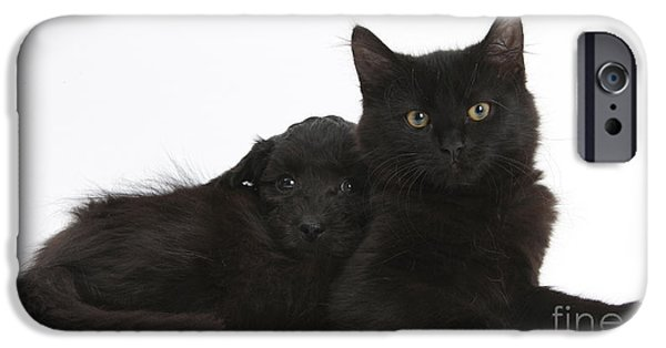 Black Dog iPhone Cases - Kitten And Puppy iPhone Case by Mark Taylor