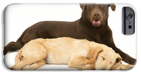 Mixed Labrador Retriever iPhone Cases - Labradoodle And Labrador Retriever iPhone Case by Jane Burton
