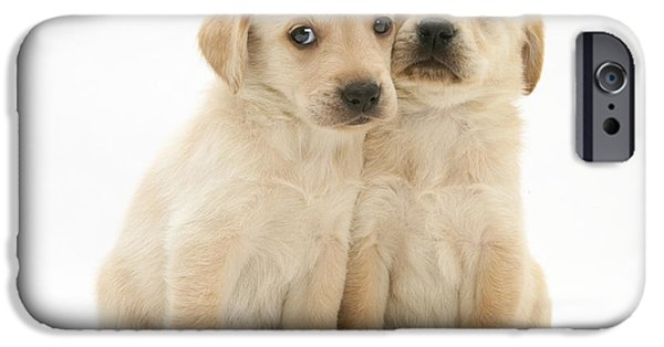 Mixed Labrador Retriever iPhone Cases - Labrador Retriever Puppies iPhone Case by Jane Burton