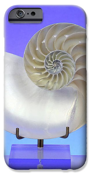 Logarithmic Spiral iPhone Case by Photo Researchers, Inc.