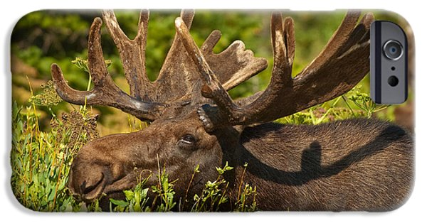 Wildlife iPhone Cases - Moose iPhone Case by Sebastian Musial