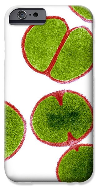 Proliferate iPhone Cases - Mrsa Bacteria, Tem iPhone Case by Biomedical Imaging Unit, Southampton General Hospital