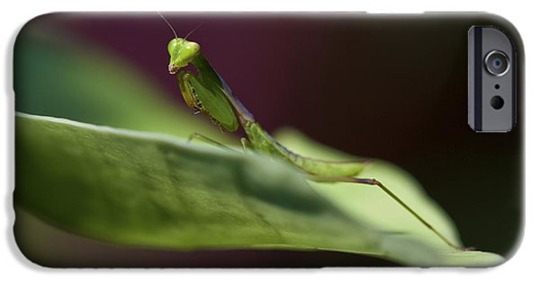Mantodea iPhone Cases - Praying Mantis iPhone Case by Zoe Ferrie