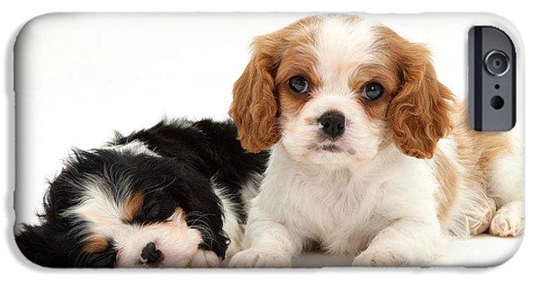 Spaniel Puppy iPhone Cases - Puppies iPhone Case by Jane Burton
