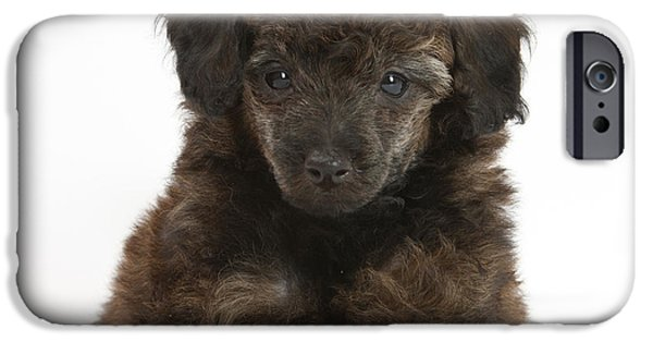House Pet iPhone Cases - Puppy iPhone Case by Mark Taylor