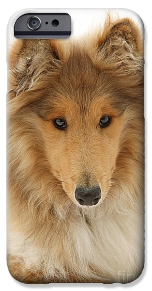 Dog Close-up iPhone Cases - Rough Collie iPhone Case by Mark Taylor