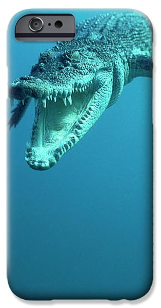 Saltwater Crocodile Crocodylus Porosus iPhone Case by Mike Parry