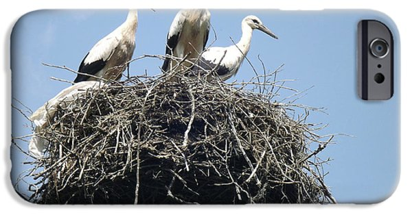 Ready To Fly iPhone Cases - 3 Storks In The Nest. Lithuania iPhone Case by Ausra Paulauskaite