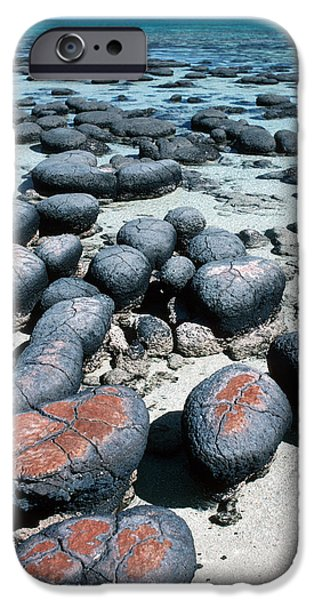Stromatolites iPhone Case by Georgette Douwma