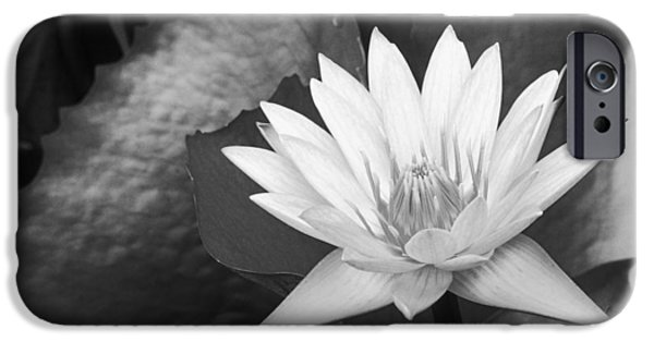Nature Center Pond iPhone Cases - Water Lily iPhone Case by Bill Brennan - Printscapes