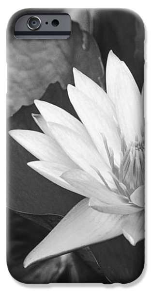 Water Lily iPhone Case by Bill Brennan - Printscapes