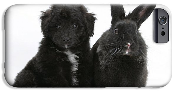 Black Dog iPhone Cases - Puppy And Rabbit iPhone Case by Mark Taylor