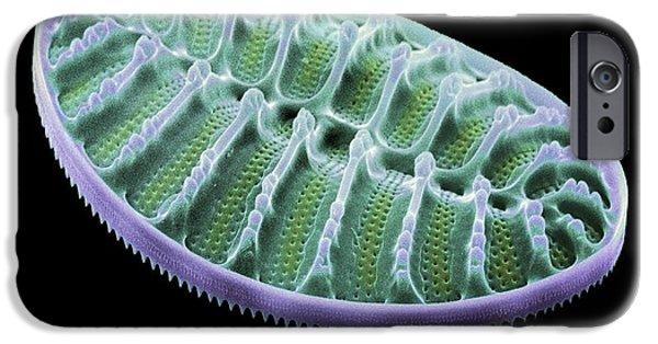 Phytoplankton iPhone Cases - Diatom Alga, Sem iPhone Case by Steve Gschmeissner