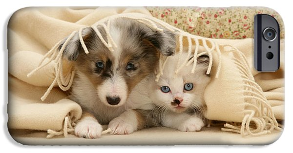 Puppies iPhone Cases - Kitten And Pup iPhone Case by Jane Burton