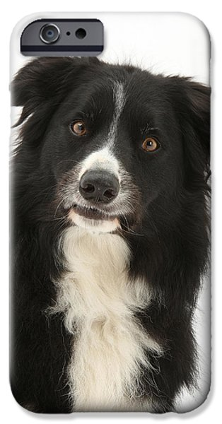 Dog Close-up iPhone Cases - Border Collie iPhone Case by Mark Taylor