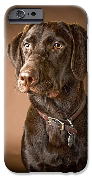 Chocolate Lab iPhone Cases - Chocolate Labrador Retriever Portrait iPhone Case by David DuChemin