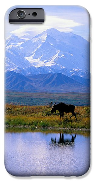 Animal Photographs iPhone Cases - Denali National Park iPhone Case by John Hyde - Printscapes