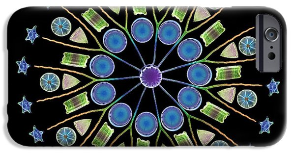 Frustule iPhone Cases - Diatom Assortment, Sems iPhone Case by Steve Gschmeissner