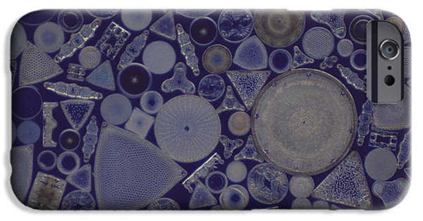 Diatoms iPhone Cases - Diatoms iPhone Case by M. I. Walker