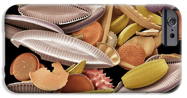 Calcareous Phytoplankton Photographs iPhone Cases - Diatoms, Sem iPhone Case by Steve Gschmeissner