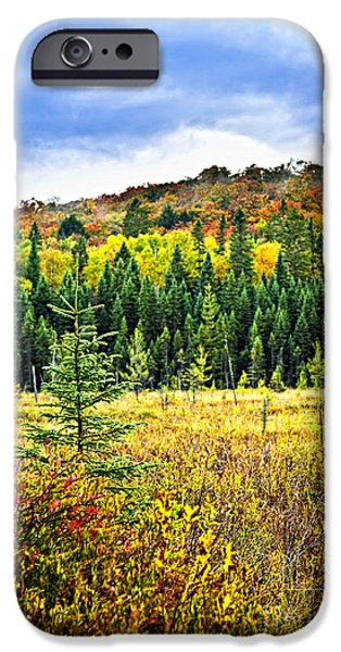 Autumn iPhone Cases - Fall forest iPhone Case by Elena Elisseeva