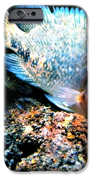 Fish living in Denmark iPhone Case by Colette V Hera  Guggenheim