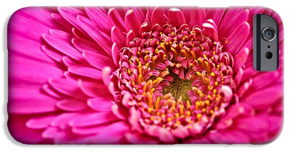 Fuschia iPhone Cases - Gerbera flower iPhone Case by Elena Elisseeva