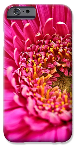 Gerbera flower iPhone Case by Elena Elisseeva