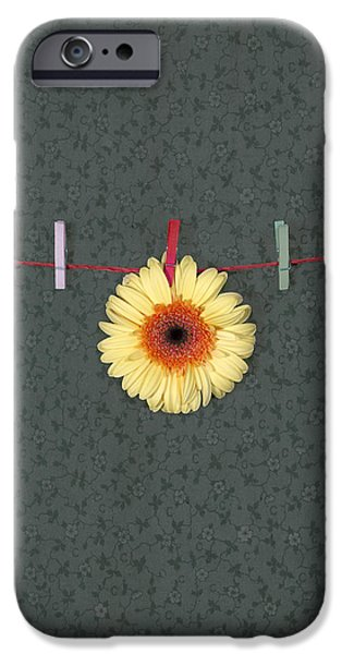 Petals iPhone Cases - Gerbera iPhone Case by Joana Kruse