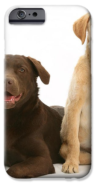 Labradoodle And Labrador Retriever iPhone Case by Jane Burton