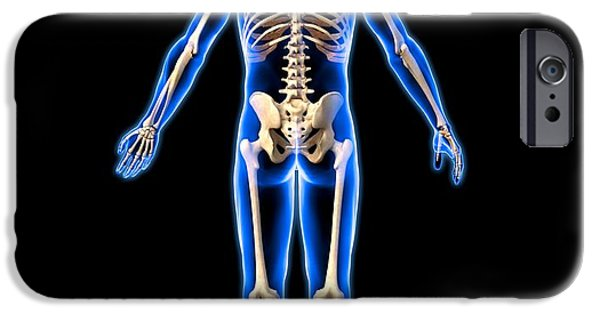 Dexterity iPhone Cases - Male Skeleton, Artwork iPhone Case by Roger Harris