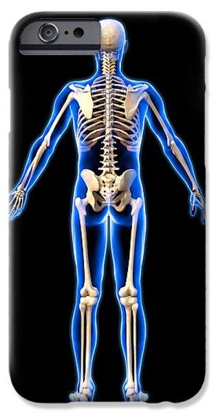 Male Skeleton, Artwork iPhone Case by Roger Harris