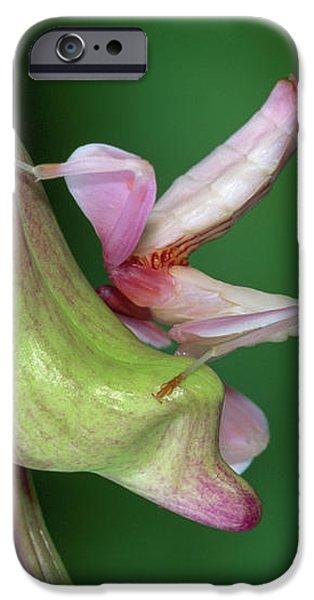 Orchid Mantis Hymenopus Coronatus iPhone Case by Thomas Marent
