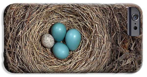 Robin iPhone Cases - Robins Nest And Cowbird Egg iPhone Case by Ted Kinsman