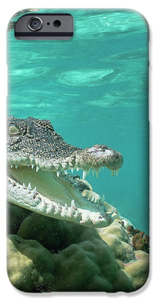 Saltwater Crocodile Crocodylus Porosus iPhone Case by Mike Parry