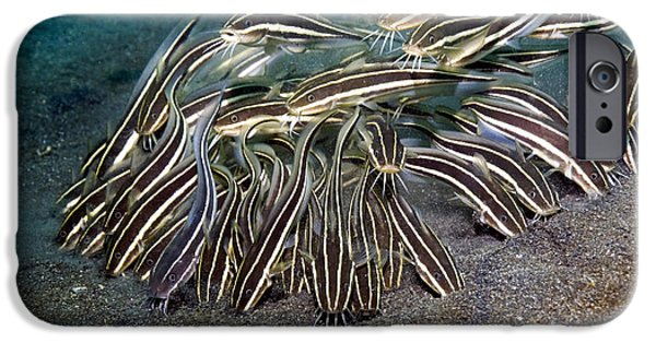 Marine iPhone Cases - Striped Eel Catfish iPhone Case by Georgette Douwma