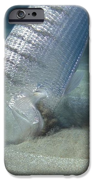 Striped Seabream Searching For Prey iPhone Case by Angel Fitor