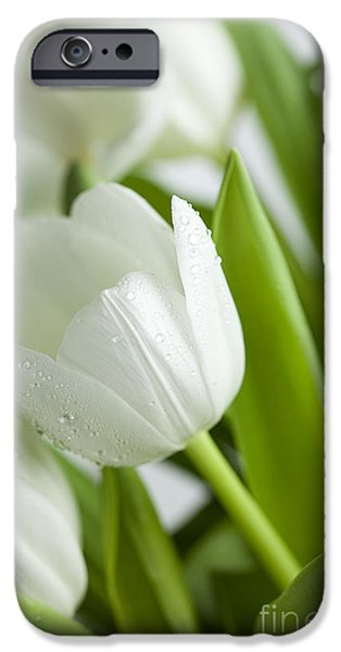 Blossom iPhone Cases - White Tulips iPhone Case by Nailia Schwarz