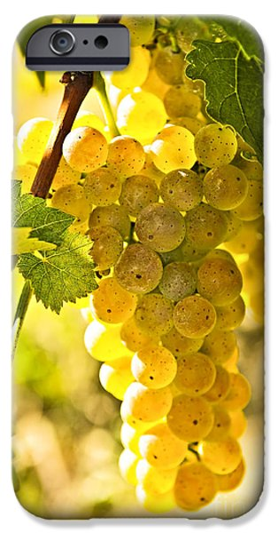 Chardonnay iPhone Cases - Yellow grapes iPhone Case by Elena Elisseeva