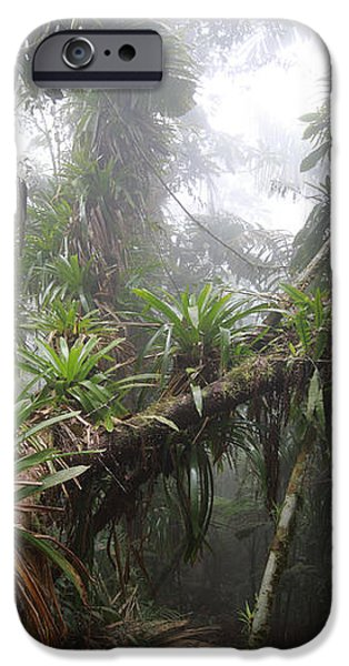 Bromeliad Bromeliaceae And Tree Fern iPhone Case by Cyril Ruoso