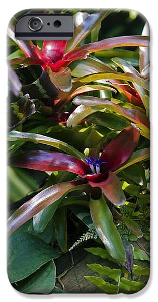 Bromeliad Plant iPhone Case by Dr Keith Wheeler