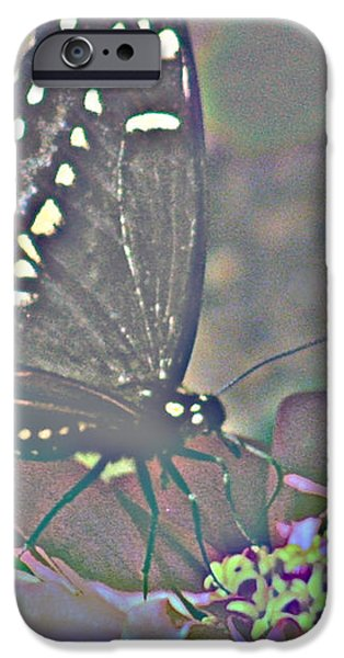 BUTTERFLY COLLECTION iPhone Case by Debra     Vatalaro