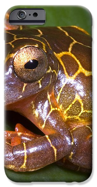 Clown Tree Frog iPhone Case by Dante Fenolio