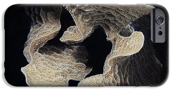 Calcium Carbonate iPhone Cases - Coral design iPhone Case by Jean Noren