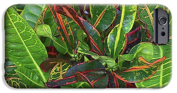 Floral Photographs iPhone Cases - 5- Croton iPhone Case by Joseph Keane